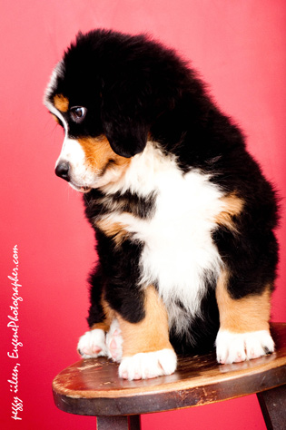 dog-photographer-eugene-