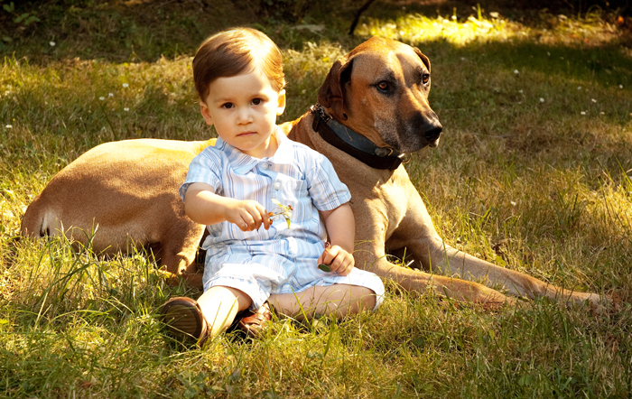 family photographers eugene dogs-