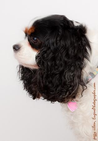 photographers-dogs-eugene-