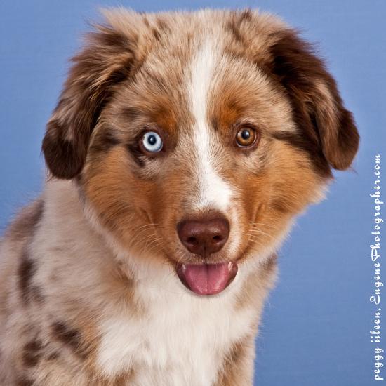 dog-pets-photographers-eugene-oregon-