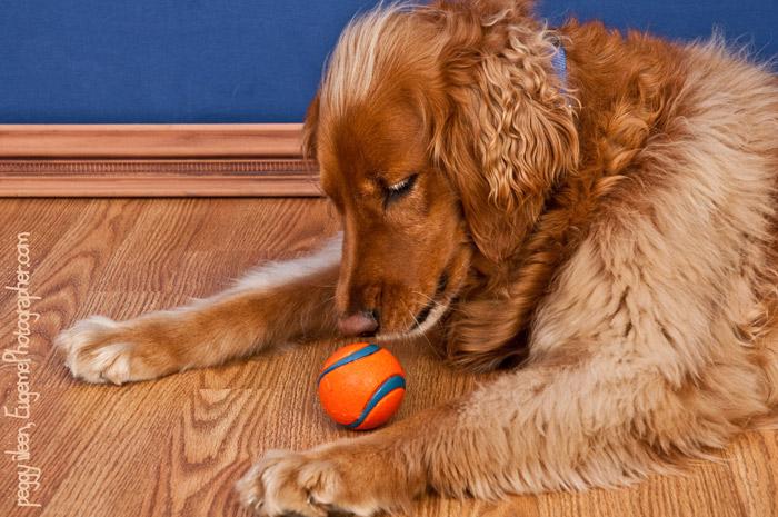 dog-photographer-eugene-oregon-
