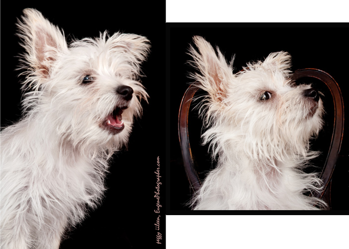 dog-photography-eugene-oregon-
