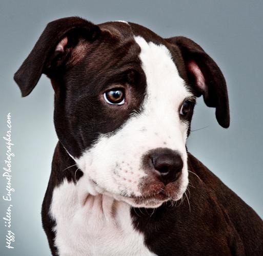 dog-photography-eugene-oregon-