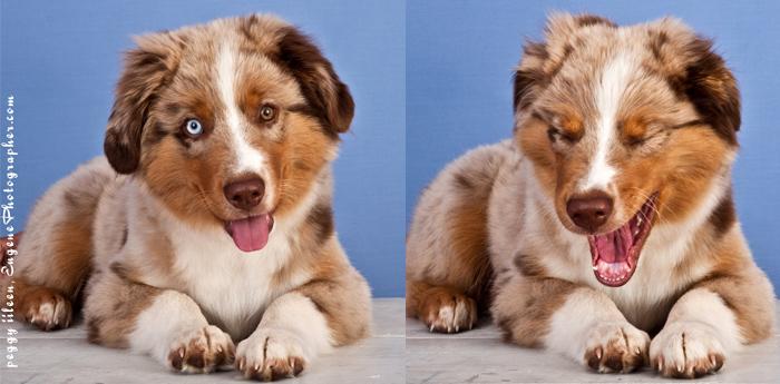 pet-dog-photographer-eugene-oregon-