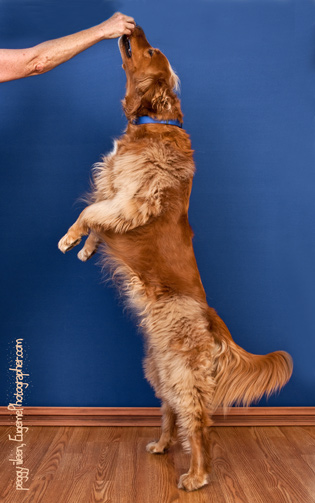 pet-photographer-eugene-oregon-