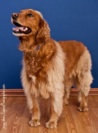pet-photography-eugene-oregon-