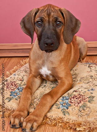 pet-photography-studio-eugene-oregon-