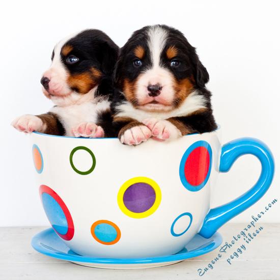 dog-photography-puppies-photographer-eugene-oregon-