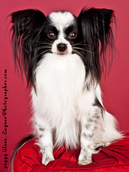pet-portrait-photography-eugene-oregon-