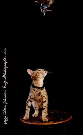 cats-and-dogs-photographers-eugene-oregon-