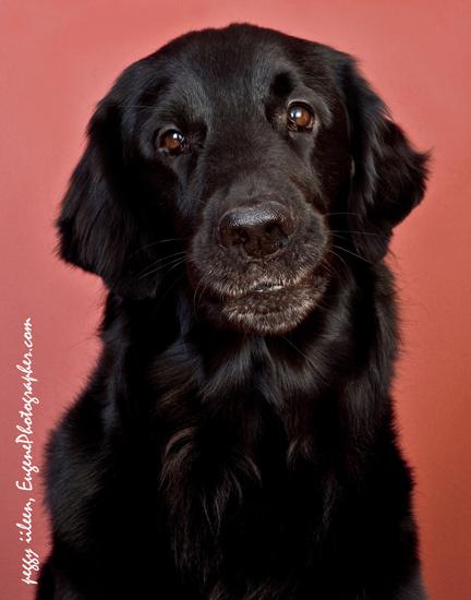 pet-portraits-dog-photography-eugene-oregon-