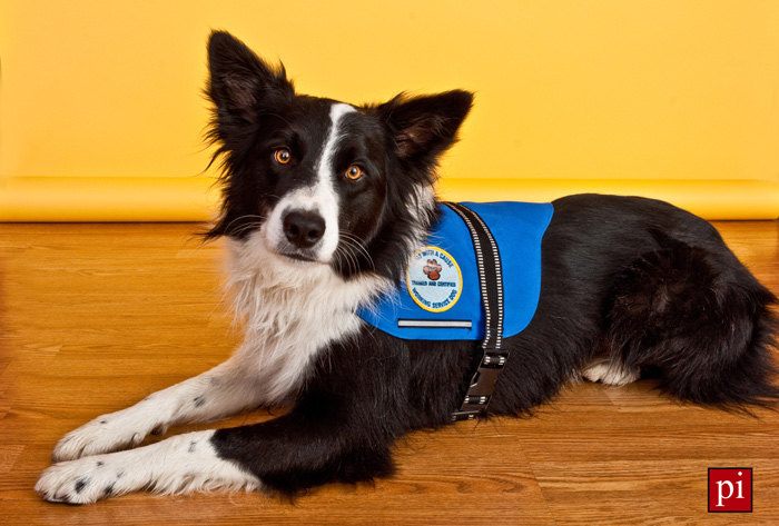 Oreo service dog pet photography