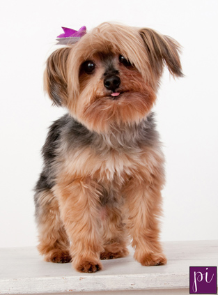 pet photography for Buttons in eugene oregon